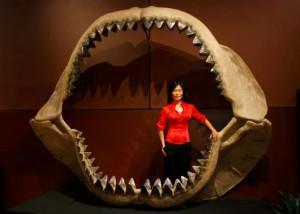 Megalodon-sharks-size
