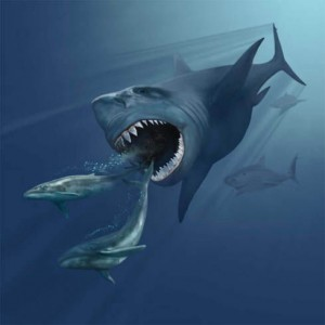 Megalodon-the-great-predator