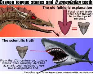 Megalodon-tongues