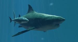 megalodon-vs-great-white-shark