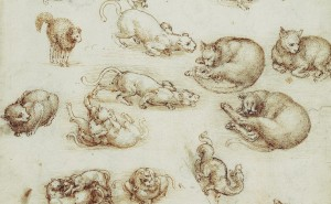 Leonardo da Vinci, Cats, lions, and a dragon c.1513-18.